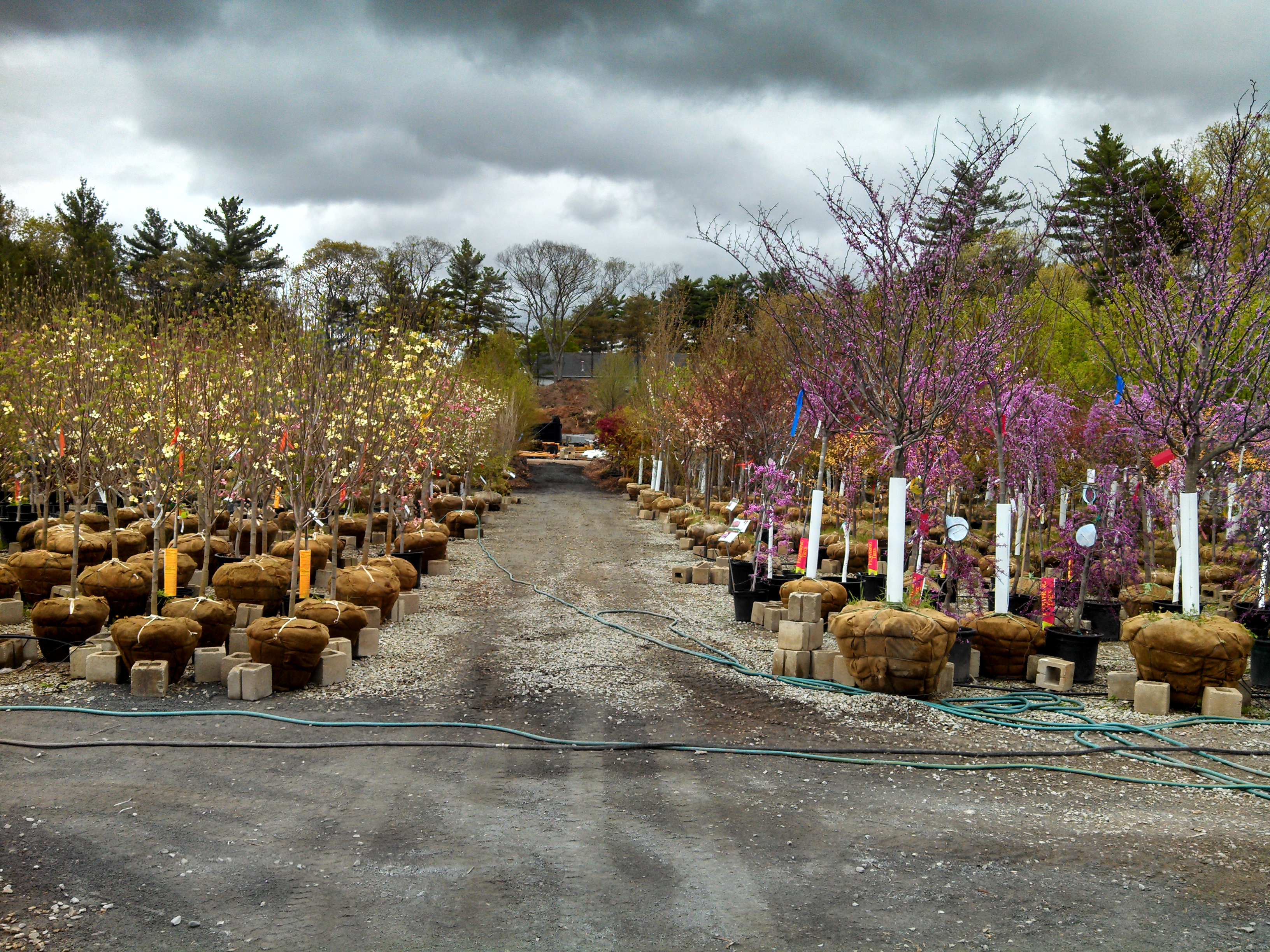 Specials » Seoane Landscaping
